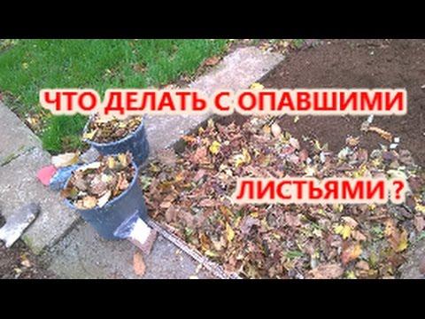 Что делать с опавшей листвой весной на участке