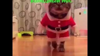 Приколы с котами 2016 Которолик выпуск 5 смешные коты видео с комментариями