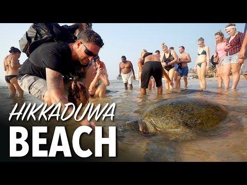 Sri Lanka BABY SEA TURTLES - Hikkaduwa Beach