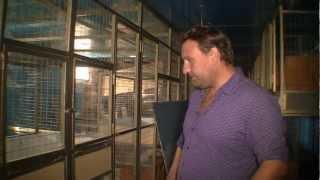 Многопрофильное ЛПХ Александра Казакова. Помещение для птиц