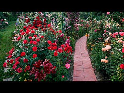 Красивый и Изящный ландшафт двора своими руками идей