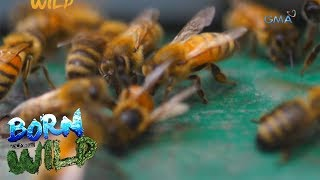 Born to Be Wild: Exploring the process of pollination