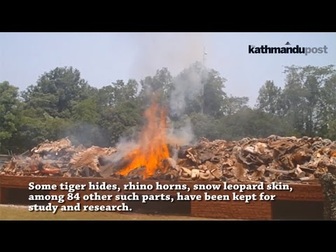 Animal parts destroyed in Chitwan - May 22, 2017