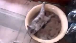 кот не как не отаидет от наркоза