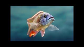 Video Satoyama II - Japans Secret Watergarden feat & David Attenborough - HD 720p. download MP3, 3GP, MP4, WEBM, AVI, FLV Juli 2018