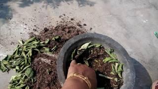 195 - How to grow Dahlias (Hindi /Urdu) 16/11/16