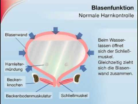 So funktioniert die Harnblase - YouTube