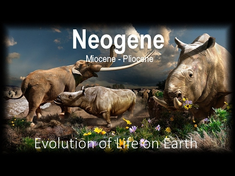 The Evolution of Life part 12 : Neogene