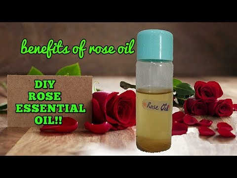 diy:-how-to-make-rose-essential-oil-at-home|-benfits-and-uses-of-rose-oil