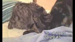 feline gives birth