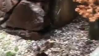House Backyard in Utah Pummeled by Hailstones - 1036930-1
