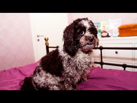 Dogs feeling Guilty #96