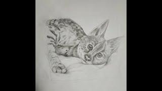 Бесплатный урок по рисованию животных  Рисуем кошку  Рисунок гепарда  Поэтапное рисование