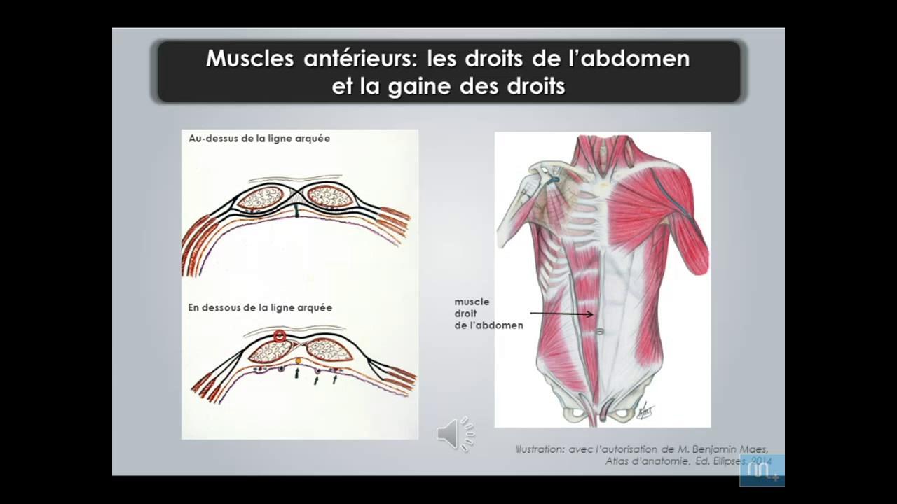 Tolle Abdominalregionen Anatomie Fotos - Anatomie Ideen - finotti.info