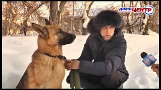 24 часа 15 02 19 Возвращение собаки