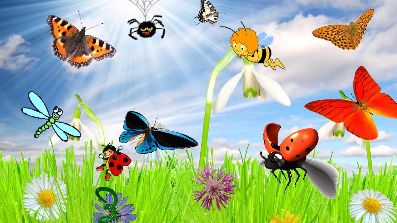 разводили сералях, насекомые картинки слайд подозревая, что