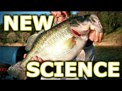 NEVER Use Chartreuse For Largemouth (Science)