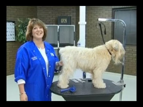 Brushing the Wavy Coated Dog: Removing Mats & Line Brushing