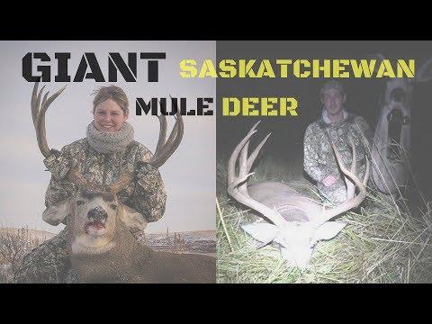 Two Giant Saskatchewan Mule Deer