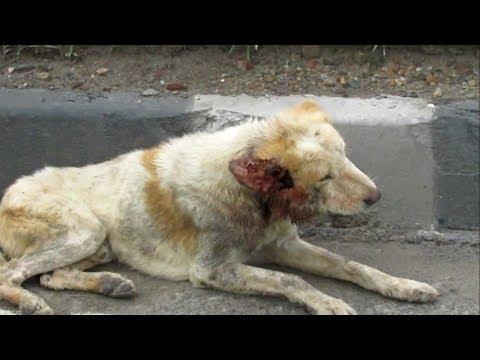 Wounded dog lost on busy highway rescued