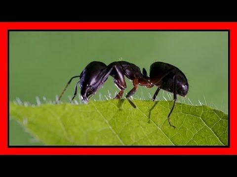 Tutti I Rimedi Naturali Per Combattere Le Formiche Youtube