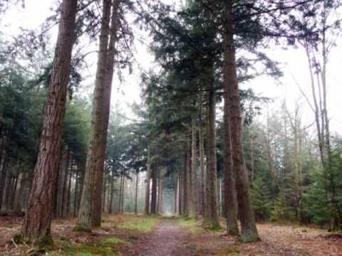 les sapins Douglas de la forêt de la Commanderie - YouTube