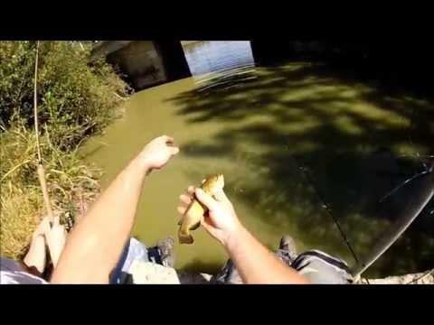 P che du poisson chat en tang de belles prises youtube - Peche du poisson chat au coup ...