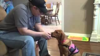 Diabetic Alert Dog - Kelly Sutton