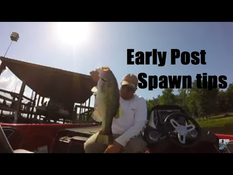 Lake Fork Bass Fishing: Early Post Spawn Tips and Tactics