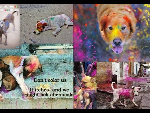 WHY DOGS SHOULD SUFFER THIS HOLI? (Short film on social cause)
