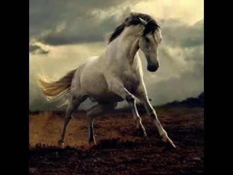 Fall Horse Wallpaper Rata Blanca Caballo Salvaje Youtube