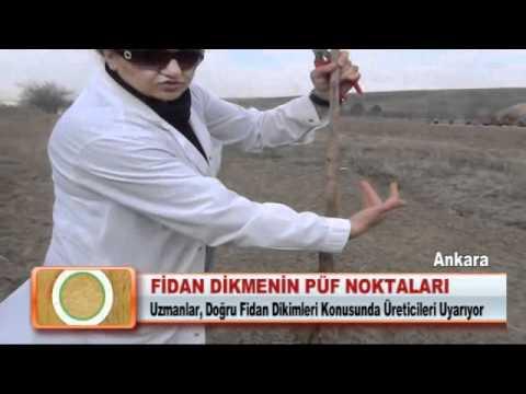 Fidan Dikmenin Puf Noktalari Youtube