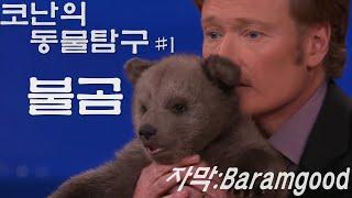 코난 오브라이언의 동물탐구 #1 - 아기 불곰 (동물 전문가 데이빗 미제쥬스키) in 코난쇼
