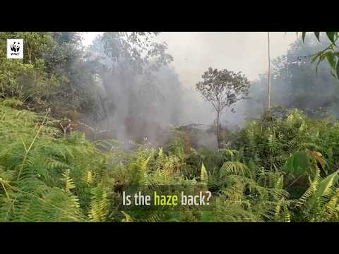 A race against time to put out fires in Riau | WWF-SINGAPORE