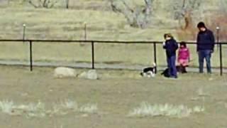 Boulder Dog Park