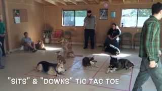 Winter Games At Top Dog Obedience