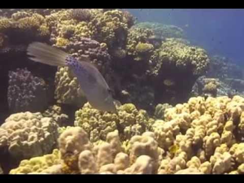 Gotta abu ramada Mer rouge Egypte