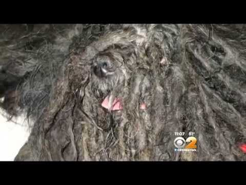 SPCA: Dog Found Inside Abandoned LI House Looked Like 'Old Mop,' Could Barely Walk