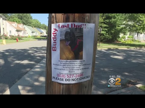 Demanding Answers: Town vs Missing Dog Signs
