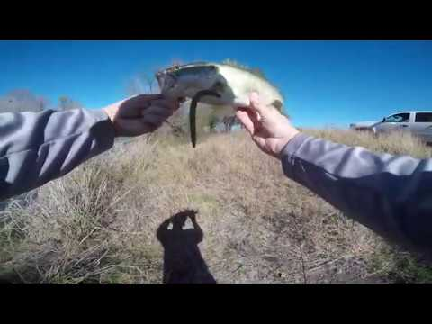 Pond Bass Bank Fishing