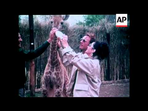 ELIZABETH TAYLOR and RICHARD BURTON VISIT THE KRUGER NATIONAL PARK - COLOUR