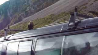 Native New Zealand Kea Birds at Deaths Corner, Arthurs Pass, New Zealand