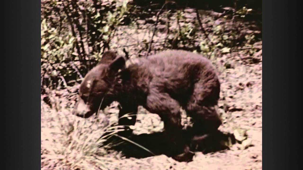 smokey the bear dies decades tv network youtube