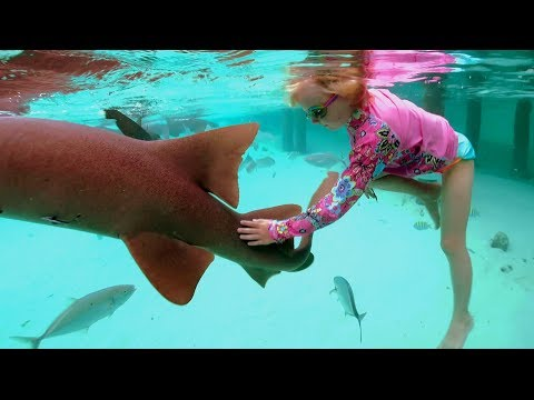 Shark Week with Elizabeth Swims Swimming with Sharks