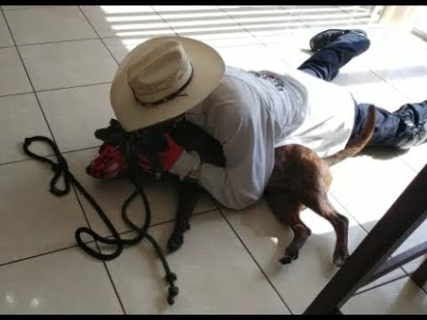 Fighting Pit Bulls in Miami Part 1- Dog Whisperer BIG CHUCK MCBRIDE vs. Cesar
