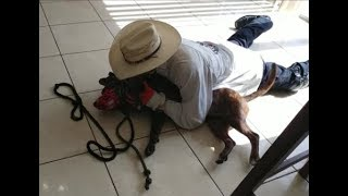 Fighting Pit Bulls in Miami Part 1- Dog Whisperer BIG CHUCK MCBRIDE vs. Cesar