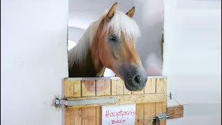 Pferd gewinnen Sonntag ✮ ♥