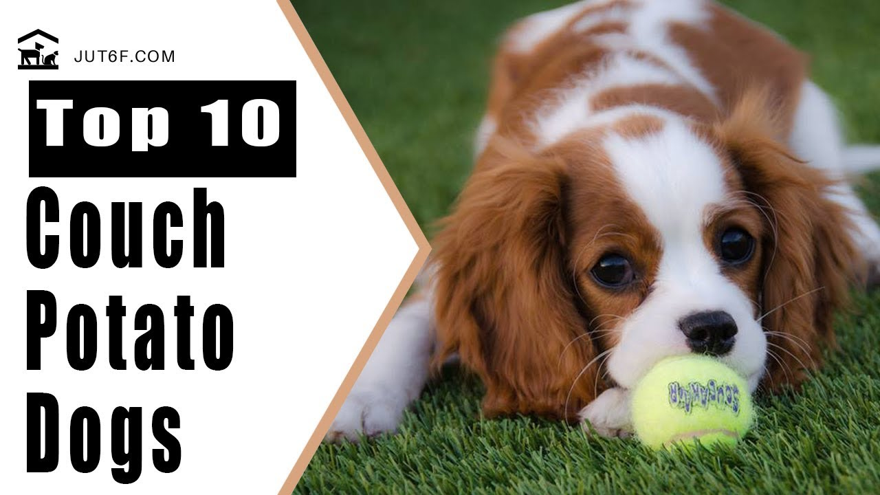 Top 10 Couch Potato Dogs