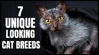 7 UniqueLooking Cat Breeds