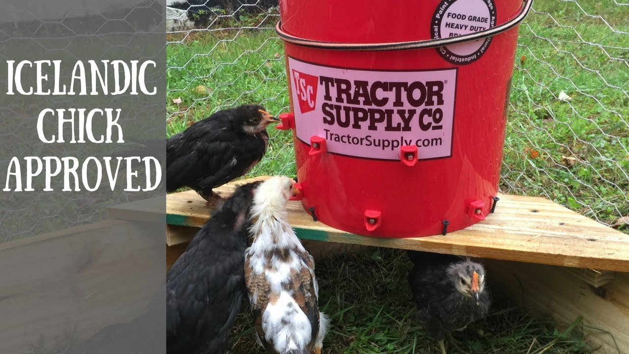 Diy 5 Gallon Automatic Chicken Waterer Using Horizontal Waterers